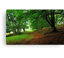 Walking in an ancient forest Canvas Print