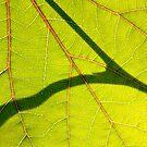 *Love Veins* by yvesrossetti