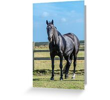 Cheval Noir Greeting Card