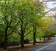 THE AVENUE, MOUNT WILSON by Phil Woodman