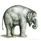 Baby Elephant g2011-008 by schukina by schukinart