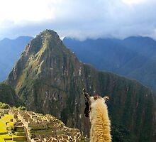 Llama-eye view of Machu Picchu by Citisurfer