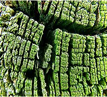 green trunk close up Photographic Print
