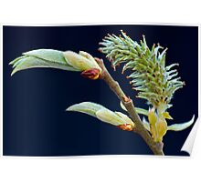 Spring Bud Poster