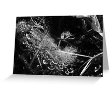 Wet Webs Greeting Card