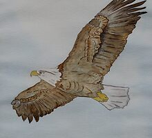 The Bald Eagle by Anne Gitto