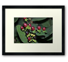 Berries but not to eat! Framed Print