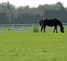 Horse In Field  by MissDawnM