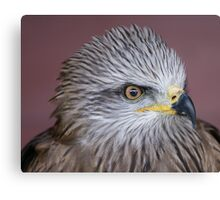 Black Kite Canvas Print