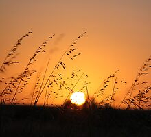 Sunset on the Nullarbor Plains by Finkie