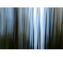 Trees of Blue Photographic Print