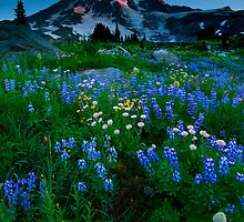 Rainier Wildflower Dawn by DawsonImages