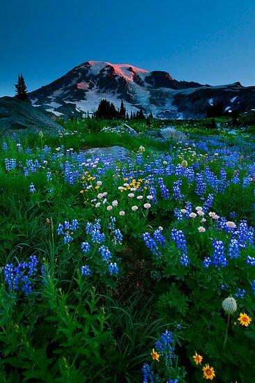 Rainier Wildflower Dawn by DawsonImages