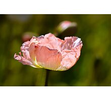 Peach Poppy Photographic Print