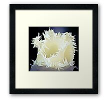Frilly Tulips Framed Print