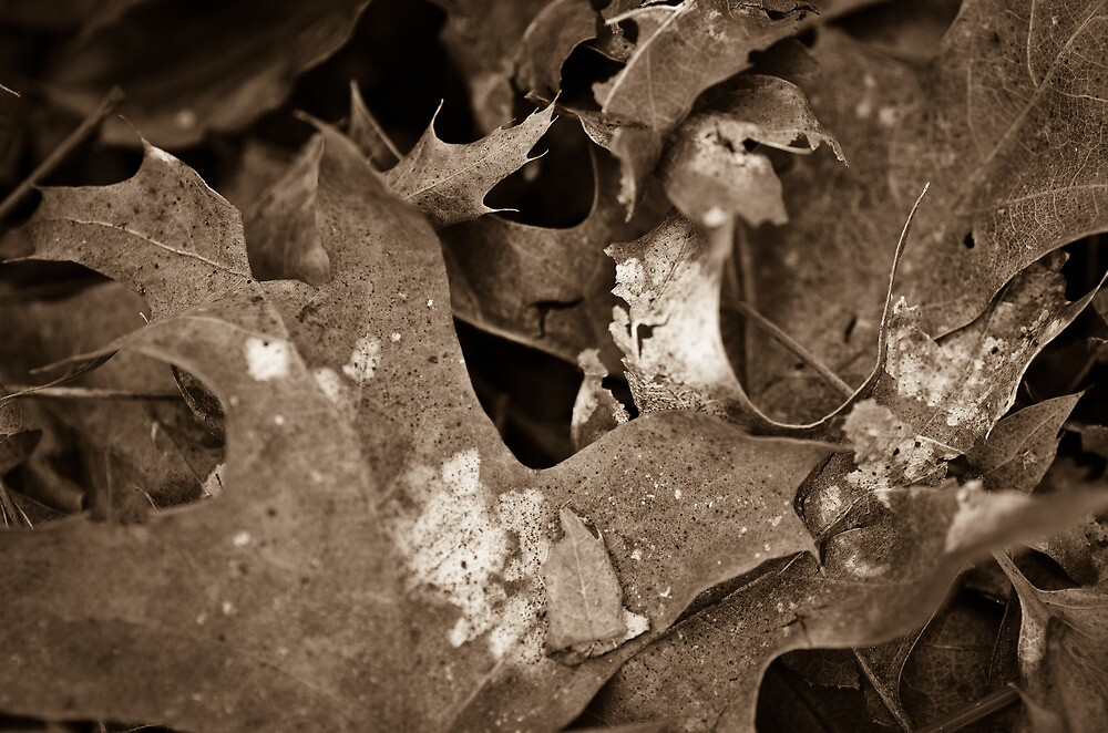 Leaves, Mt Lofty Botanical Gardens, South Australia by Derek  Rogers