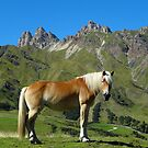 A horse in the Dolomites, Italy by Trine