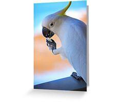 Sugar Please! (Hamilton Island, Australia) Greeting Card