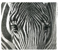 Zebra G2011-017 by schukina by schukinart