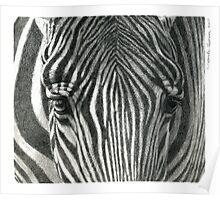 Zebra G2011-017 by schukina Poster