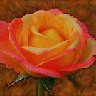 Antiqued Rose by KelseyGallery