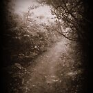The Road Less Travelled by Lisa Hafey