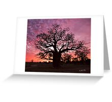 Boab Tree at sunset with a mackerel sky, Derby, Western Australia. Greeting Card
