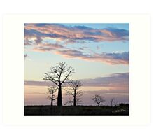 Boab trees at sunrise, Derby marshlands. Kimberley, Western Australia. Art Print