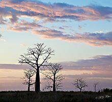 Boab trees at sunrise, Derby marshlands. Kimberley, Western Australia. by Mary Jane Foster