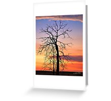 Blue Hour,Solitary Boab at sunset. Derby, West Kimberley, Western Australia. Greeting Card