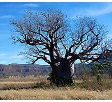 Boab Tree in the Cockburn Ranges, Kimberley. Western Australia. Photographic Print