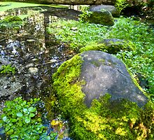 The Moss of Silver Springs by Adam Bykowski