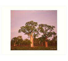 Boab Trees facing the setting sun. Derby, West Kimberley Region of Western Australia. Art Print