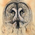 Great Grey Owl g2012-041 by schukina by schukinart