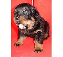 Rottweiler Puppy Howling For Attention Photographic Print