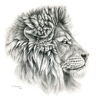 King - Lions profile g2012-044 by schukina by schukinart