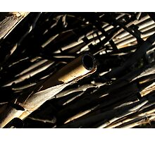 Wind Canes Photographic Print