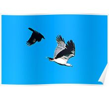 Crow Attack Poster