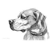 Pointer dog portrait g037 by schukina Photographic Print