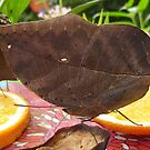 It's a leaf!!!! Or is it? by Vicki Spindler (VHS Photography)