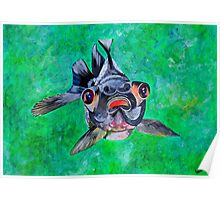 Blackmoor Goldfish Poster
