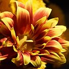 fall colored flower by Linda  Makiej