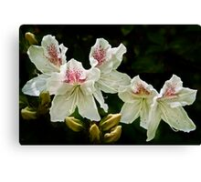 2013 Calendar - Light and Bloom - March Canvas Print