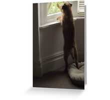 Please Don't Leave Me!!! Greeting Card