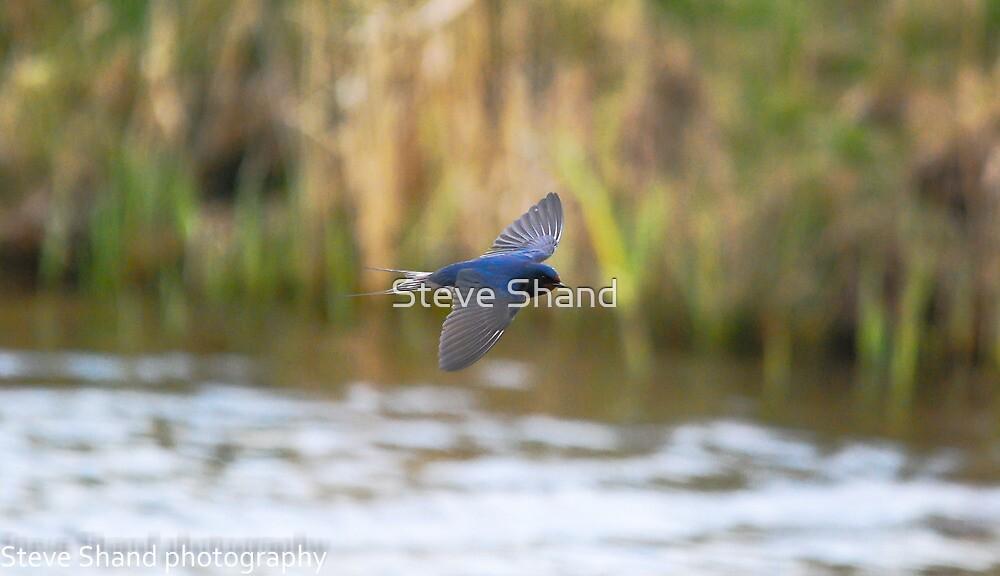 swallow in flight by Steve Shand