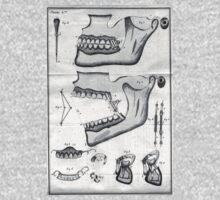vintage dental illustration by postraphaelite