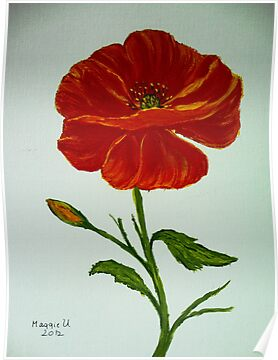 Red poppy by maggie326