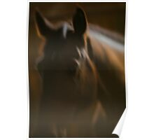 Cavallo Grand Prix Portrait. by Brown Sugar. Poster