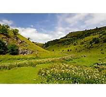 Cressbrook Dale near to Wardlow  Photographic Print
