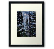 Pines at Lake Lousie, Banff, Alberta Canada Framed Print